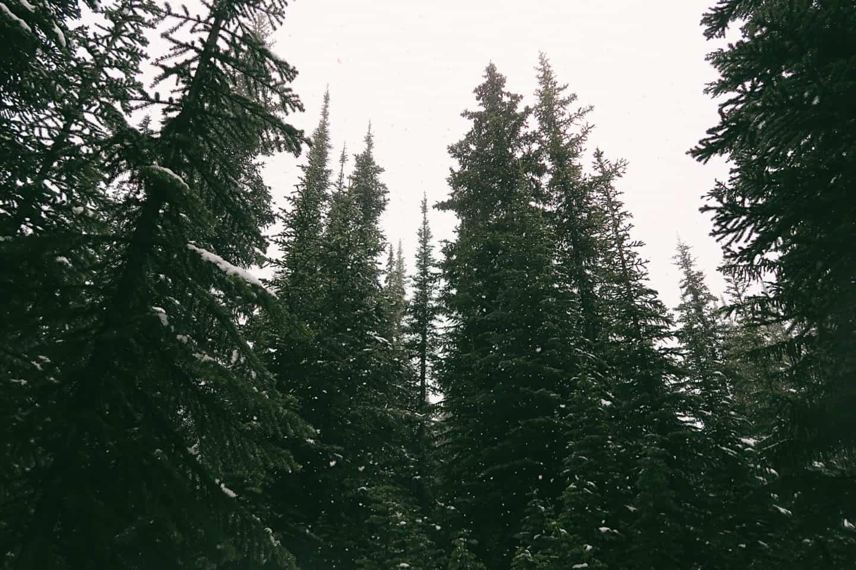 Bow Summit, Banff, Alberta