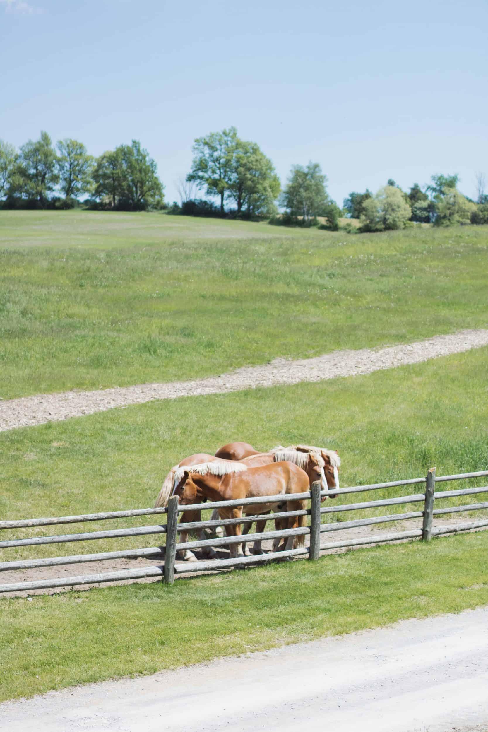South Pond Farms in Pontypool, Ontario | wedding venues near Kawartha Lakes | rustic farmhouse venue near Toronto | Diary of a Toronto Girl, a Canadian lifestyle blog