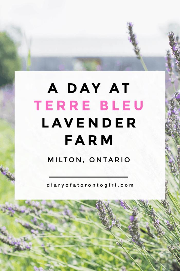 Spending a day at Terre Bleu Lavender Farm in Milton, Ontario