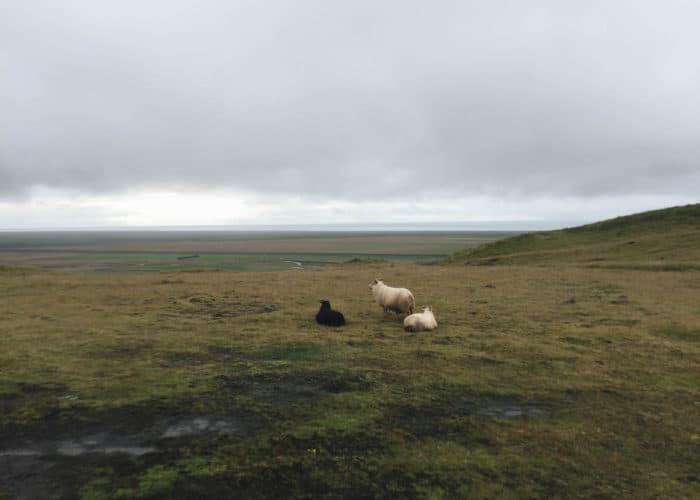 Skogafoss Hiking Trail in Iceland