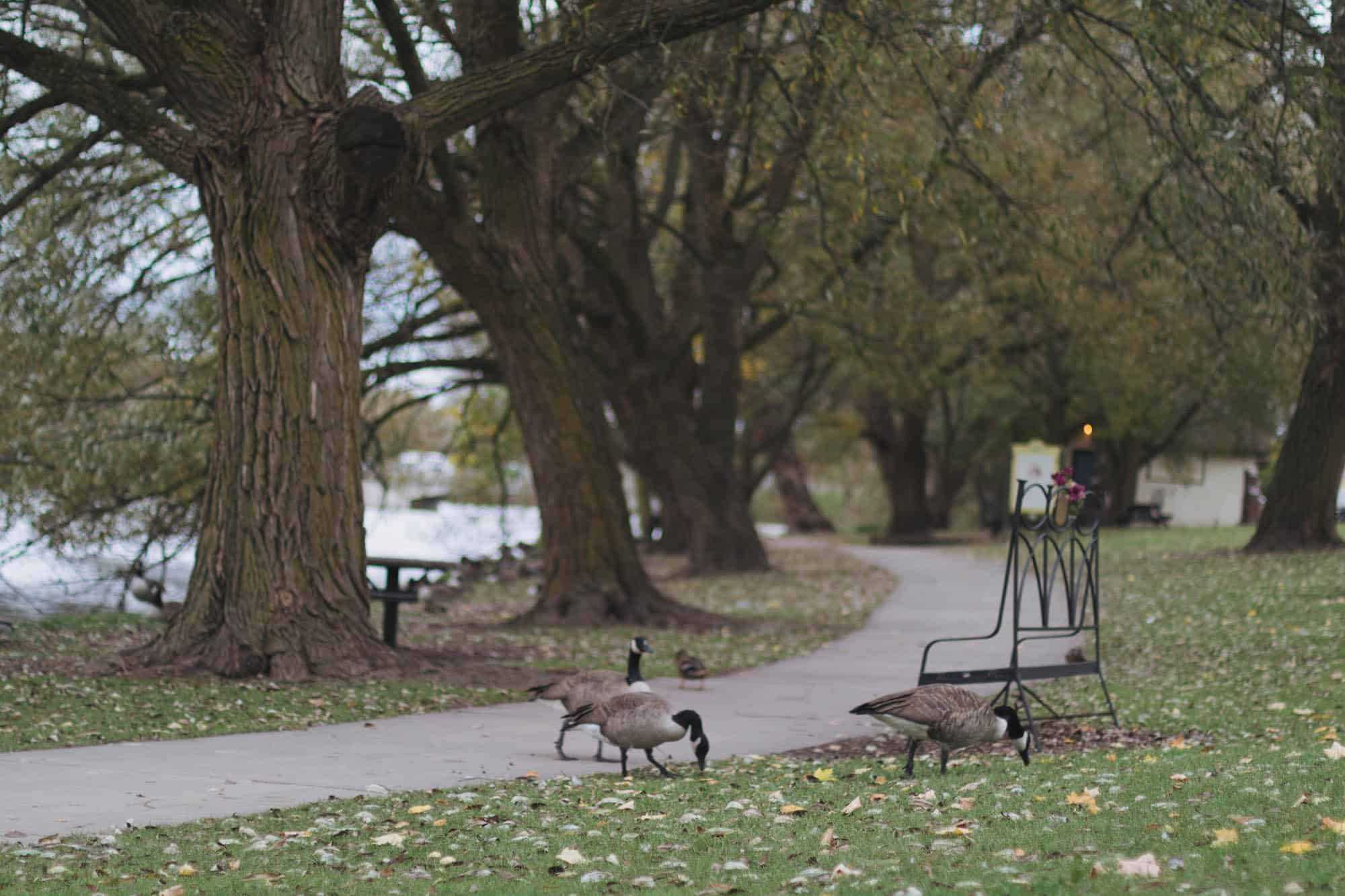 The best things to do in Stratford, Ontario | what to do and where to go in Stratford, Ontario, Canada | Diary of a Toronto Girl