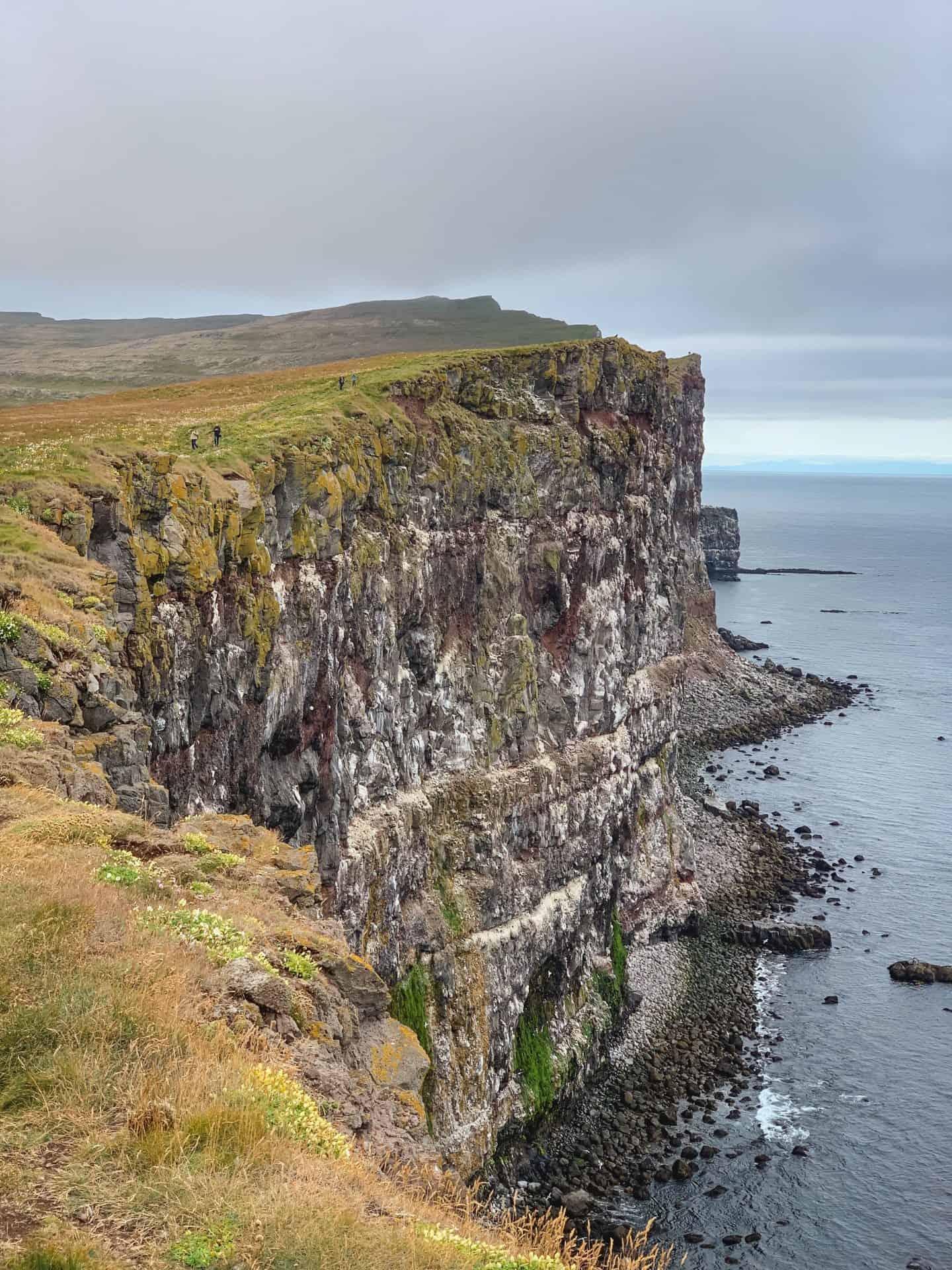Látrabjarg Cliffs in the Westfjords of Iceland