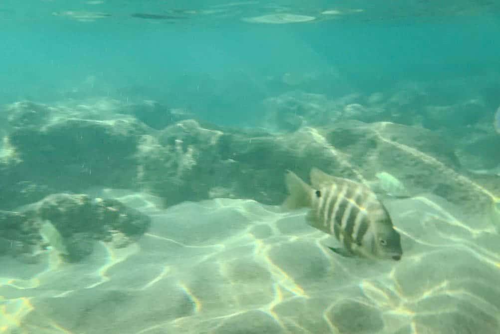 Snorkeling at Hanauma Bay in Oahu, Hawaii