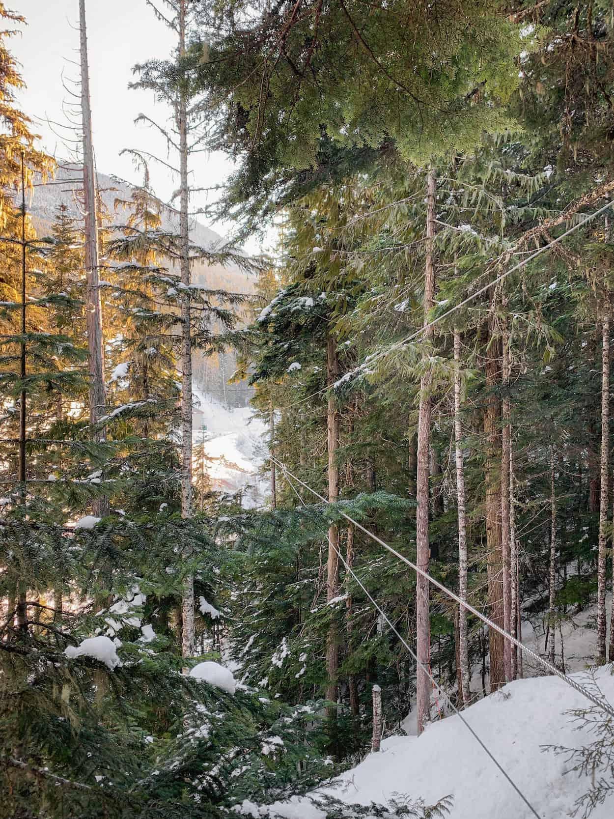 Ziplining the Eagle tour with Ziptrek Ecotours in Whistler, British Columbia