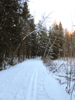 York Regional Forest in Newmarket, Ontario
