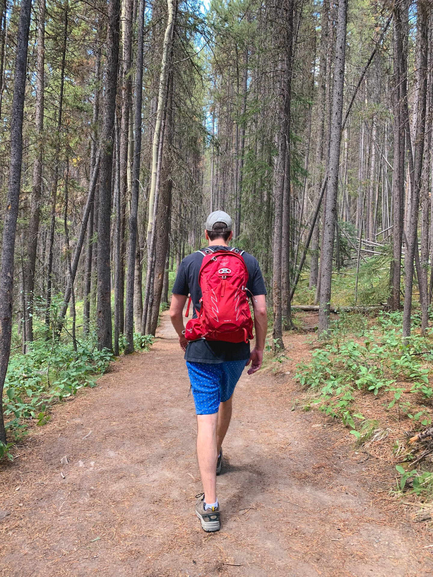 Johnston Canyon & Ink Pots hike in Banff, Alberta