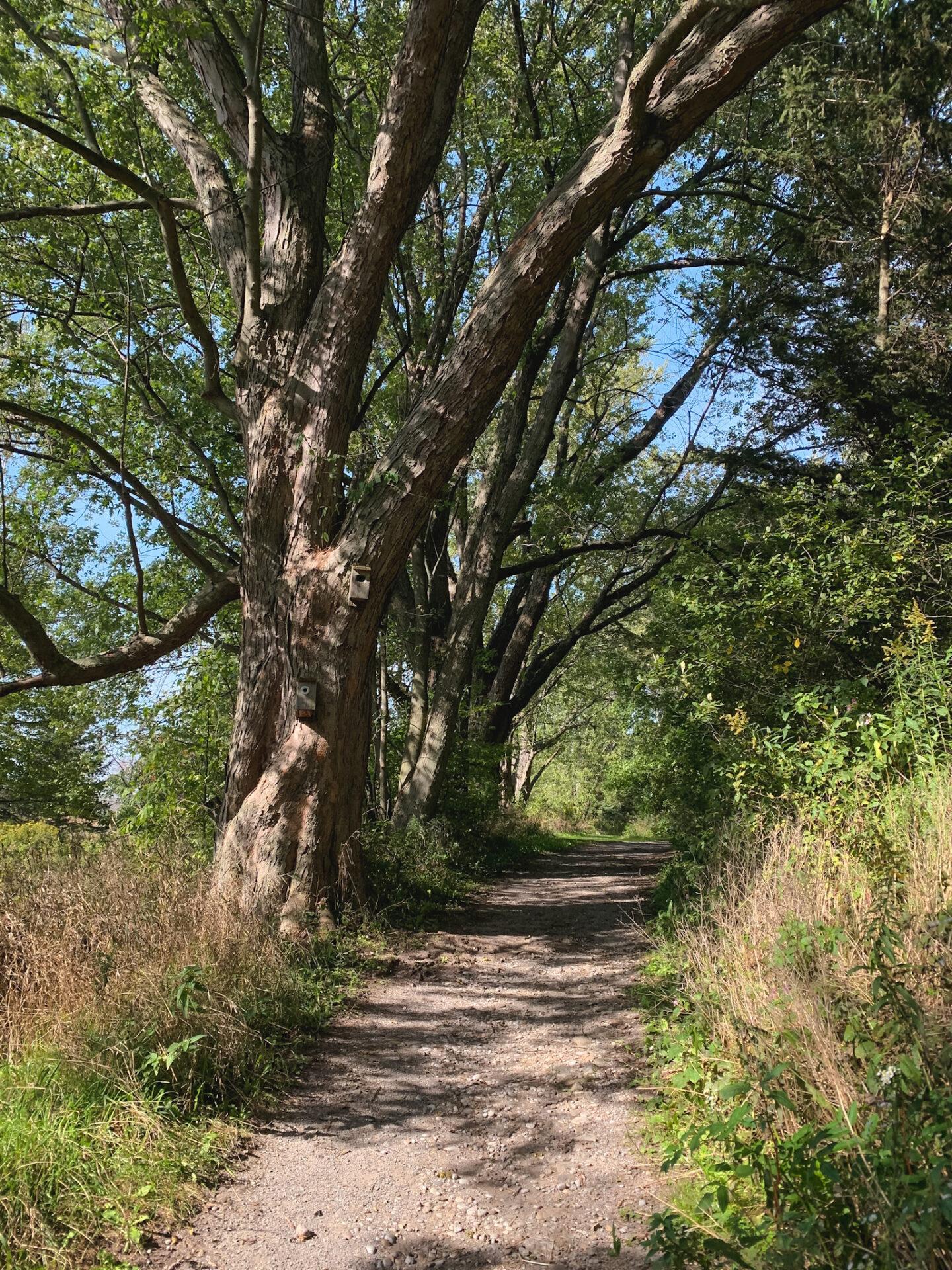 Hiking at the McLaughlin Bay Wildlife Reserve in Oshawa, Ontario